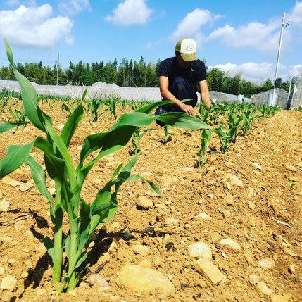 農作業イメージ