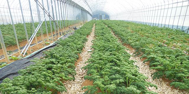 農産物の栽培・販売イメージ
